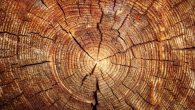 Nove primjene jednog od najboljih i najjeftinijih građevisnkih materijala Naučnici i istraživači sa KTH Kraljevskog Instituta u Štokholmu u zadnje vrijeme bave se drvetom. S obzirom da je Švedska zemlja koja je bogata šumama koje se više pošumljavaju nego sjeku, to nije nimalo čudno. Oni su do sada u svojim […]